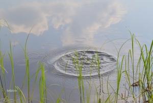 ringar på vattnet